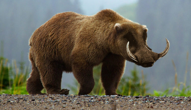 scientists admit genetically engineered grizzly boar was mistake