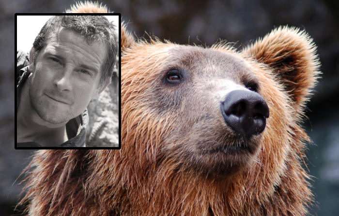 Grylls dead bear Bear Grylls