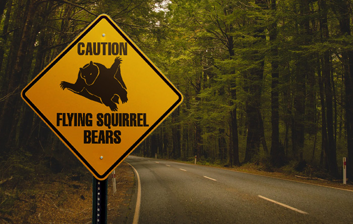 Convertibles Discouraged Due To Flying Squirrel Bears