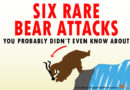 INFOGRAPHIC: Six Rare Bear Attacks You Probably Didn't Even Know About