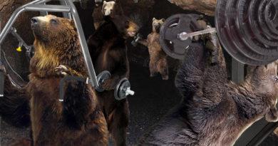 bear-gym