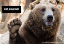 Dept of Fish and Wildlife Releases Statement on High-fiving Bears: DON'T