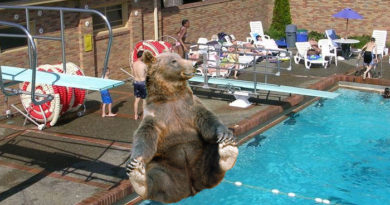 Pool Goers Silent as Bear Splashes Them With Cannonballs