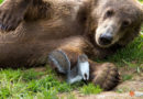Inspiring Friendship of Bear and Squirrel a Symbol of Hope, Photographers Say