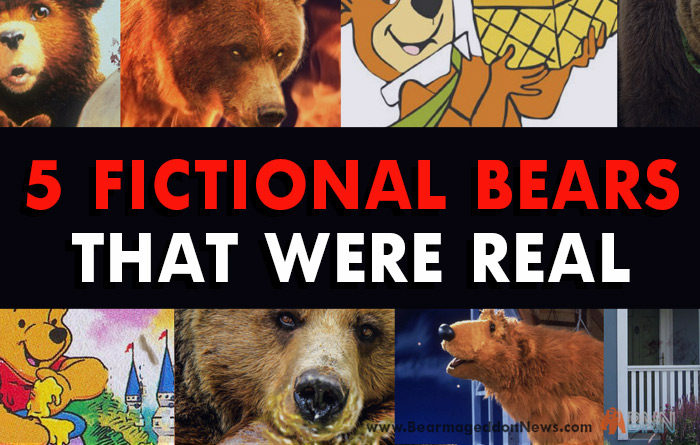 5 Famous Bears And The Shocking Truth Behind Them