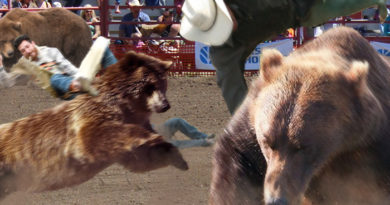 Rodeo Named Most Dangerous Sport With Addition of Bears