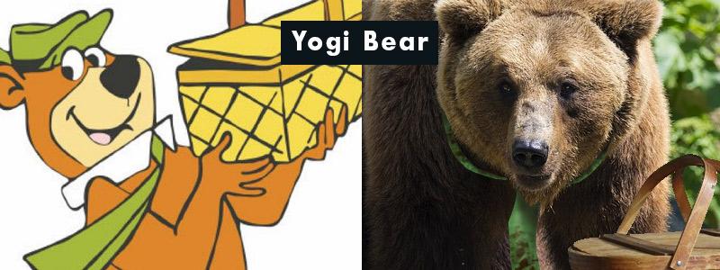 famous-yogi