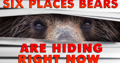 Six Tricky Places a Bear Might Be Hiding Right Now