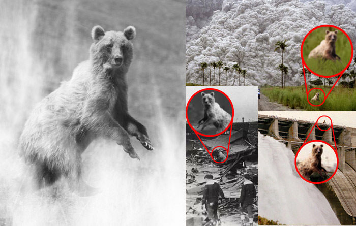 Photographic Proof: Most Disasters Caused by Very Sneaky Bear