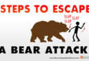 Steps to Escaping a Bear Attack