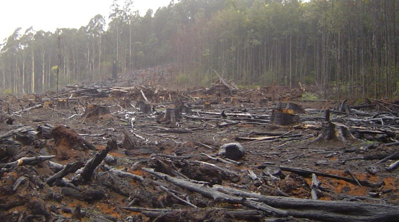 Mass Deforestation Proof Bears Fart in the Woods