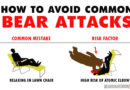 How to Avoid Common Bear Attacks